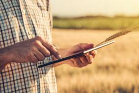 Evalúa tu conocimiento de buenas prácticas agrícolas con Innovatrigo