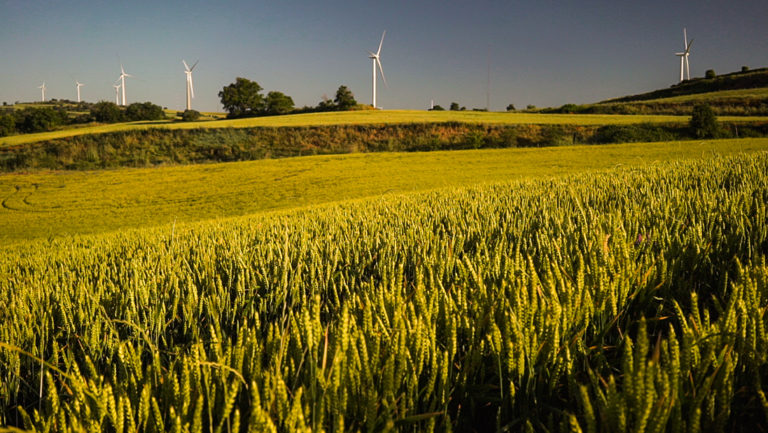 Innovatrigo celebra su segunda jornada online sobre trigo bajo en emisiones en Navarra